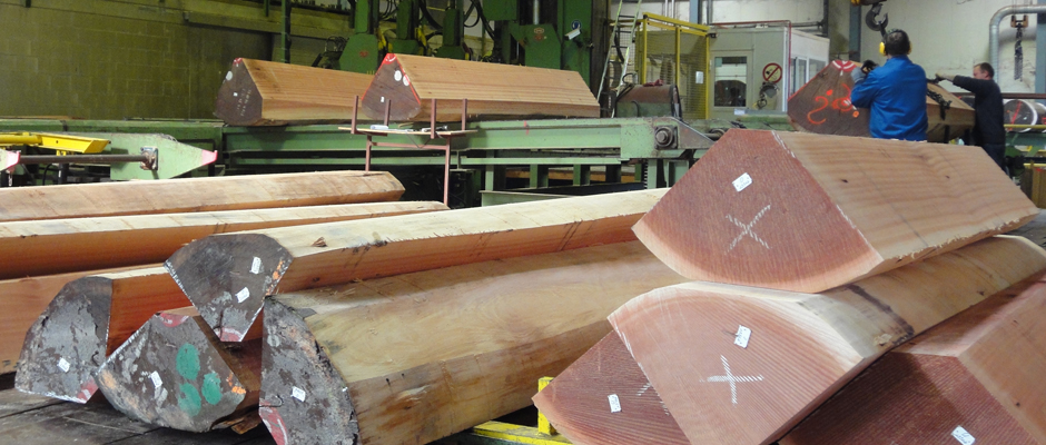SAWMILL - VENEER LOG FLITCHES SAPELLI