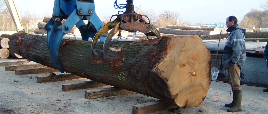 LOG YARD - LENGTH CUT OAK 2